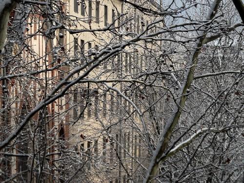 Verschneite Bäume in Berlin