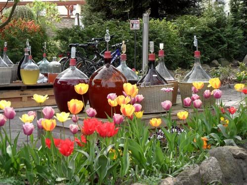 Tulpen und Ballonflaschen mit Obstwein - Baumblütenfest Werder 2015