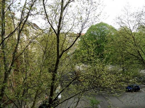 Frühling: Erste Blätter an Platanen und Kastanien in Berlin-Kreuzberg