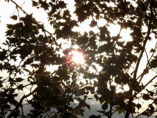 Sonne scheint durch Blätter einer Platane